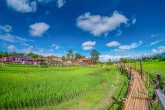 Grünes Reisfeld mit Natur und blauer Himmel backgroundBamboo Brücke auf grünem Reisfeld mit Hintergrund der Natur und des blauen  Stockfotografie