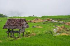 Grünes Reisfeld mit Nebel in Chiang Mai Thailand, Reisfelder an Stockbilder