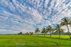 Grünes Reisfeld mit schönem Himmel und Wolke Lizenzfreies Stockfoto