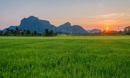 Grünes Reisfeld und -berge hinten Stockfotografie