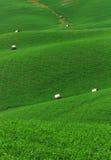 Grünes Rollenfeld Lizenzfreie Stockbilder