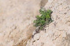 Grünes saisonalgras auf Sand Lizenzfreies Stockfoto