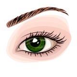Grünes schönes Auge der Frau Stockbilder
