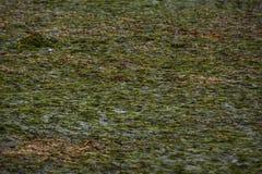 Grünes Seelagune und -berge lizenzfreie stockbilder