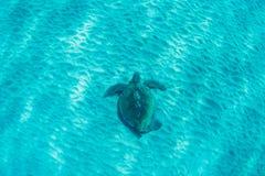 Grünes Seeschildkröte Unterwasser Stockfotografie
