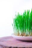 Grünes Semeni auf dem hölzernen Stumpf, verziert mit Narzissen und purpurrotem Band Stockbild