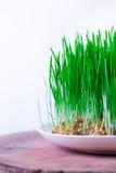 Grünes Semeni auf dem hölzernen Stumpf, verziert mit Narzissen und purpurrotem Band Stockfoto