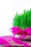 Grünes Semeni auf dem hölzernen Stumpf, verziert mit Narzissen und purpurrotem Band Lizenzfreie Stockfotografie