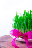 Grünes Semeni auf dem hölzernen Stumpf, verziert mit Narzissen und purpurrotem Band Lizenzfreies Stockbild
