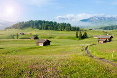 Grünes Sommerackerland Stockfotos