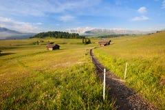 Grünes Sommerackerland Stockbild