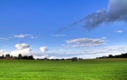 Grünes Sommerfeld stockfoto
