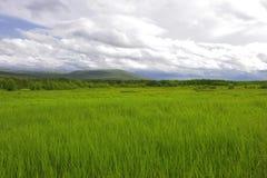 Grünes Sommerfeld und -hügel Stockbilder