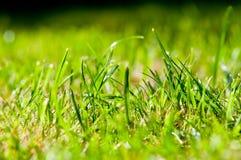 Grünes Sommergras - Makro lizenzfreie stockbilder