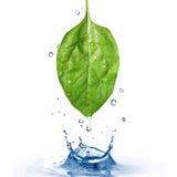 Grünes Spinatblatt mit Wassertropfen und -spritzen Stockbild