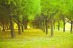 Grünes Spring Valley mit Wiesen im Hintergrund Lizenzfreie Stockfotos