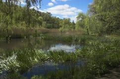 Grünes Sumpfland Stockfoto