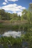 Grünes Sumpfland Stockfotografie