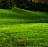 Grünes Tal stockfotografie