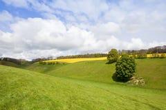 Grünes Tal im Frühjahr Lizenzfreie Stockbilder