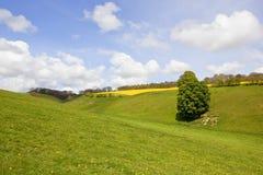 Grünes Tal im Frühjahr Stockbild