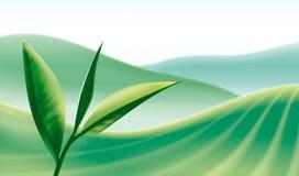 Grünes Teeblatt auf Betriebshintergrund. Lizenzfreie Abbildung