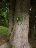 Grünes Telefon auf einem Baum Lizenzfreies Stockbild