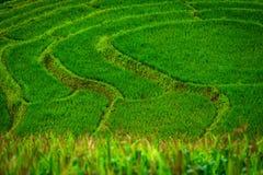 Grünes terassenförmig angelegtes Reis-Feld an Bong Piang-Wald in Mae Chaem, Chiang Mai, Thailand lizenzfreie stockbilder