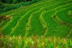 Grünes terassenförmig angelegtes Reis-Feld an Bong Piang-Wald in Mae Chaem, Chiang Mai, Thailand stockfotografie