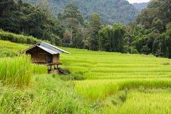 Grünes terassenförmig angelegtes Reisfeld mit kleiner Hütte an der Landschaft in Chian stockfotografie