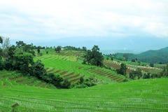 Grünes terassenförmig angelegtes Reisfeld an PA bong piang Dorf, Chiangmai, Thailand lizenzfreie stockbilder