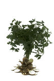 Grünes tree_2 Lizenzfreies Stockbild
