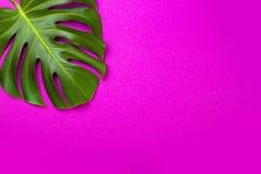 Grünes tropisches Palmblatt auf Rosa farbigem Hintergrund Minimale Ebenenlageart Obenliegende, Draufsicht, Kopienraum Lizenzfreie Stockbilder