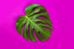 Grünes tropisches Palmblatt auf Rosa farbigem Hintergrund Minimale Ebenenlageart Obenliegende, Draufsicht, Kopienraum Lizenzfreie Stockfotos