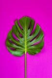 Grünes tropisches Palmblatt auf Rosa farbigem Hintergrund Minimale Ebenenlageart Obenliegende, Draufsicht, Kopienraum Stockfotos
