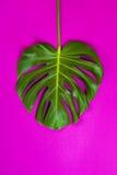 Grünes tropisches Palmblatt auf Rosa farbigem Hintergrund Minimale Ebenenlageart Obenliegende, Draufsicht, Kopienraum Stockfoto