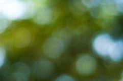 Grünes und blaues Sommer bokeh für Hintergrund Stockbild