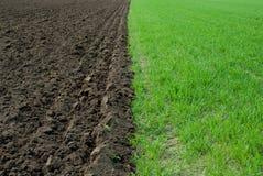 Grünes und braunes Feld Stockfotografie