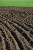 Grünes und braunes Feld 3 Stockbild