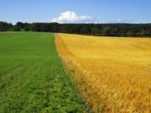 Grünes und gelbes Feld Stockbild