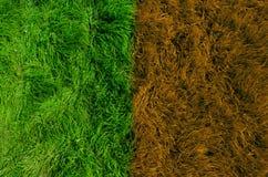Grünes und gelbes Gras Stockbilder