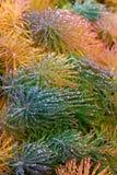 Grünes und gelbes Gras in den Tautropfen Stockfoto