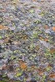 Grünes und orange Mosaik auf roky Substraten Stockbilder