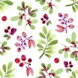 Grünes und rosa der Blätter und der Beeren nahtloses Muster des Aquarells Stockbild