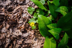 Grünes und trockenes Gras Lizenzfreies Stockfoto