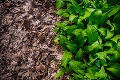 Grünes und trockenes Gras Lizenzfreie Stockfotografie