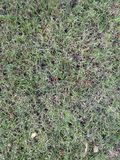 Grünes und trockenes Gras Baum auf dem Gebiet Ansicht von oben Stockfoto