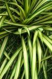 Grünes und weißes Blatt des Hintergrundes auf Garten im Freien Stockbilder