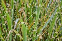 Grünes und weißes Grasmuster Stockbild