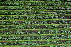 Grünes Unkraut auf der Treppe lizenzfreie stockbilder